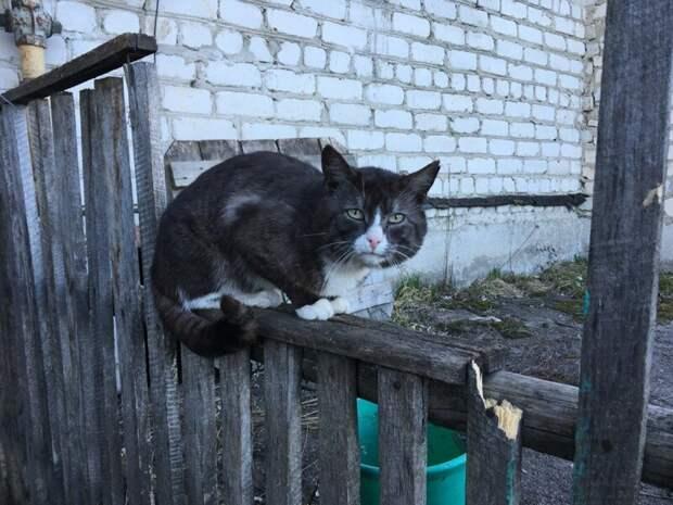 Грустно город, домашние животные, забор, кот, кошка, село, улица, эстетика