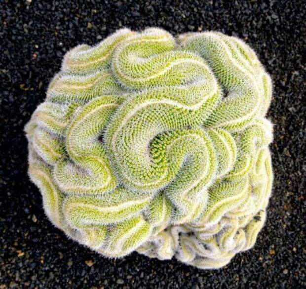 Идеальная симметрия в мире растений