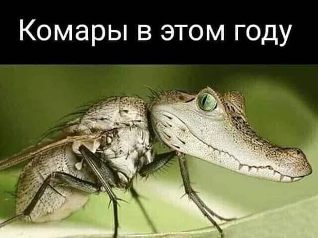 Возможно, это изображение (текст «комары в этом году»)