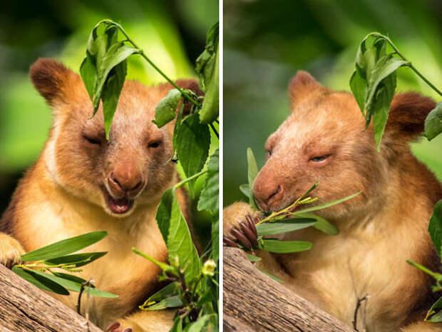 У вас нет сердца, если эти кенгуру не заставят вас улыбнуться