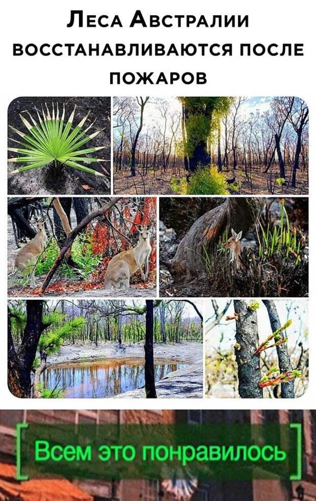 Восстанавливающийся после пожаров лес в Австралии