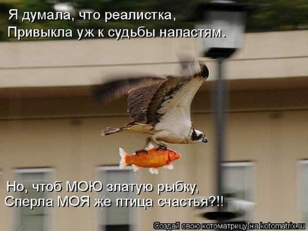 4953664_150107341_kotomatritsa_or (700x525, 109Kb)