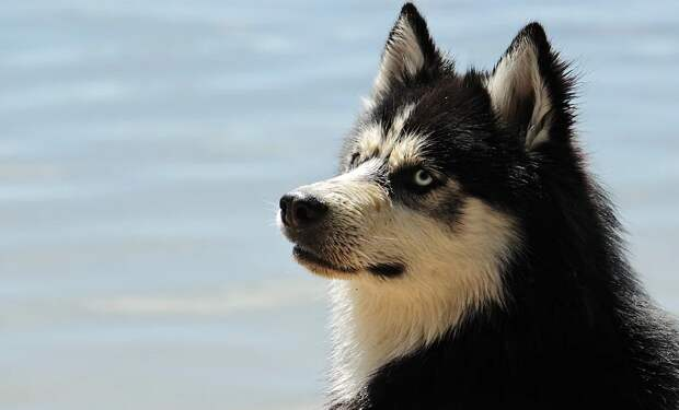 В Старом Крыму неизвестные жестоко убили двух собак, за которыми ухаживали волонтёры