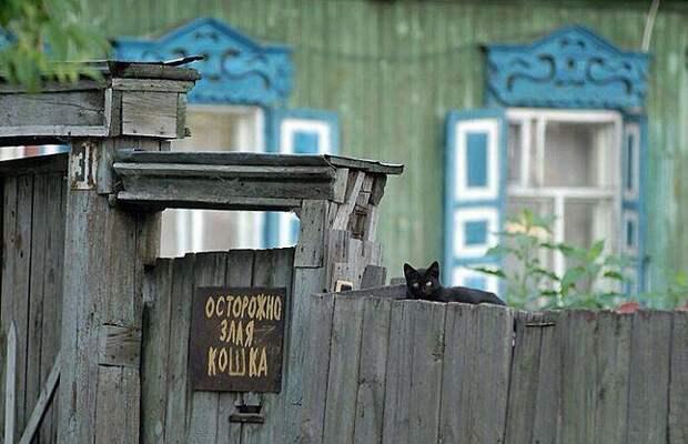 Действительно стоит опасаться город, домашние животные, забор, кот, кошка, село, улица, эстетика