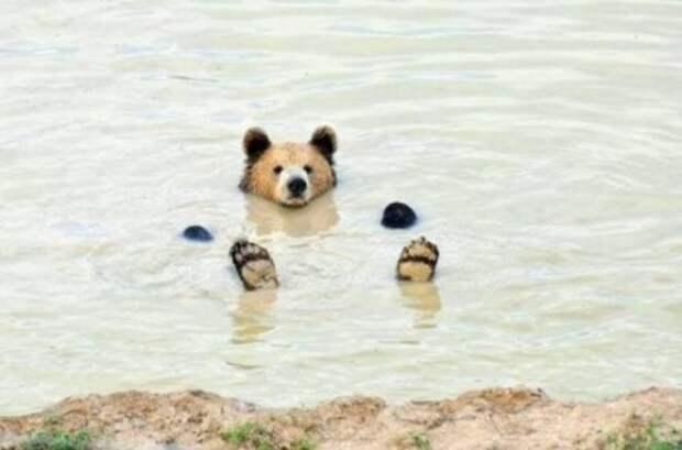 Забавные животные, которые вызовут улыбку и подарят порцию позитива