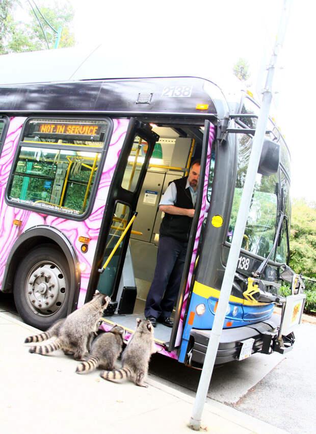 Обычная очередь в автобус автобус, люди, метро, общественный транспорт, работа, электричка