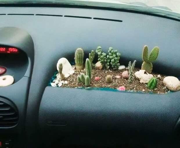 1. Маленький сад в бардачке вещь, креатив, подборка, самоделки, своими руками, сделай сам, фото