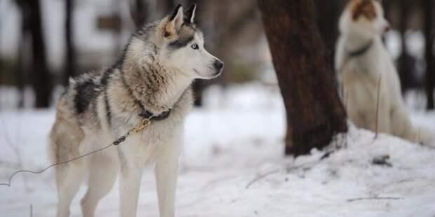 В сквере на Верхоянской привели в порядок площадку для выгула собак  – «Жилищник»