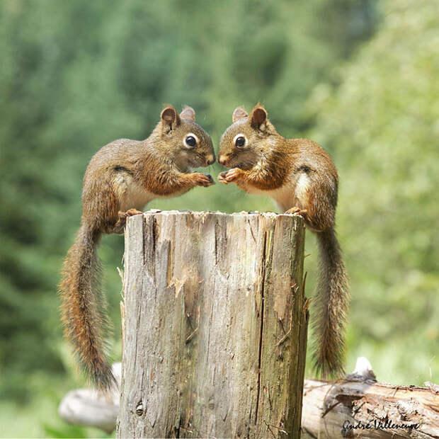 Животные-близнецы - 25 очаровательных фото-26