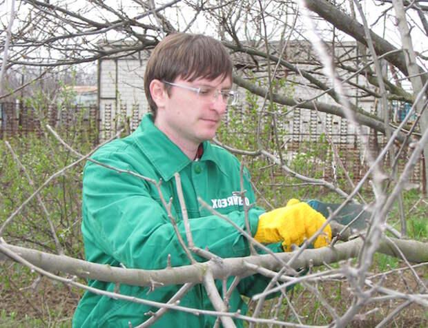 Конец зимы – пора обрезать и омолаживать садовые деревья