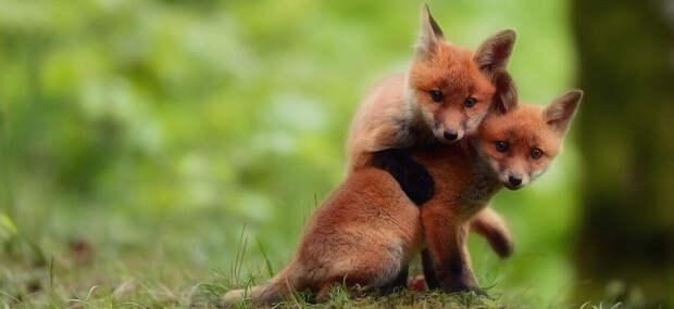 14 крошечных животных, которых так и хочется укрыть от опасностей этого мира