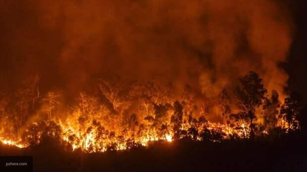 Муратов считает, что охватившие Украину пожары – цена Майдана