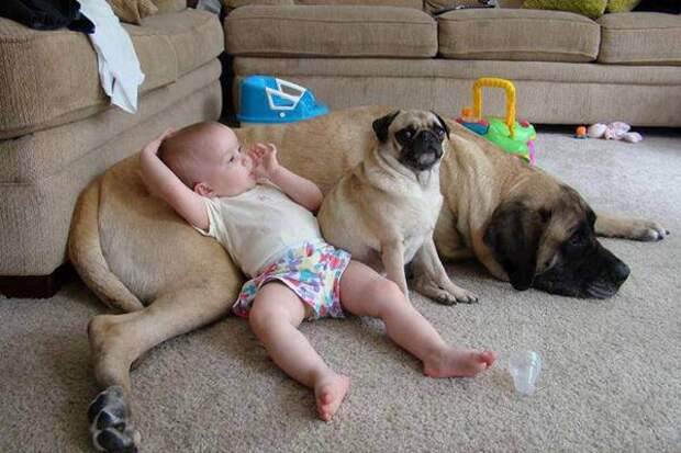 дети должны расти с домашними животными (20)