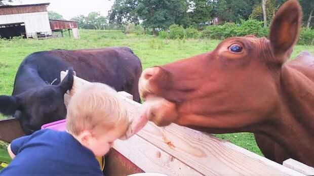 Самые милые и смешные видео про животных за неделю