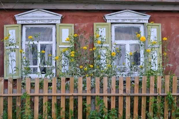 11. За окном жужжат насекомые, опыляя цветы деревня, детство, ностальгия, русская деревня, фото