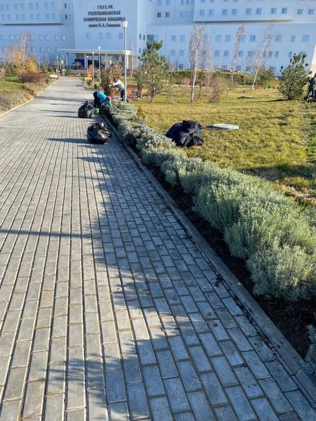У нового медцентра имени Семашко высадят 2000 кустов лаванды