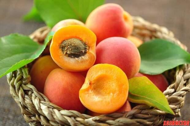 6 лучших сортов абрикосов для средней полосы