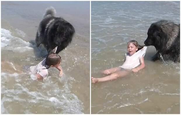 Собака спасла маленькую девочку, утащив от океанских волн видео, животные, маленькие дети, мило, собака, собаки, спасение, трогательно