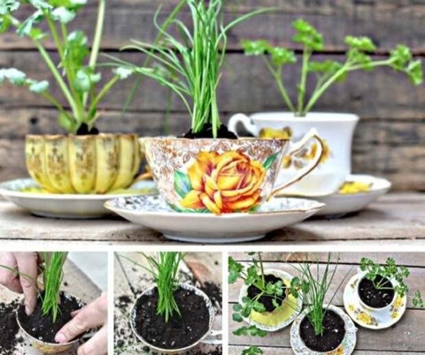 Миниатюрные сады, которые поместятся в ладошке