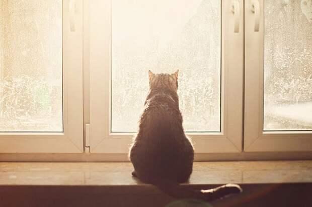 За окном серый кот смотрит на дождь сентябрьский-17 фото-