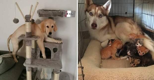 12 забавных псов, которые забыли, что они собаки, а не коты