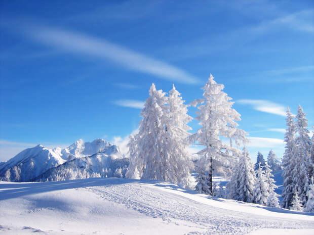 Лес и голубое небо