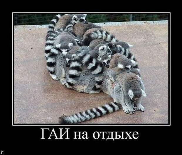 Ржачные демотиваторы про животных. Смотреть прикольные картинки ...