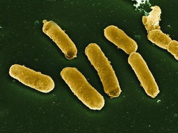 Биологические флешки: об уникальном свойстве бактерий