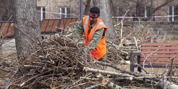 Валяющиеся ветки на Академика Ильюшина уберут до вечера 5 февраля