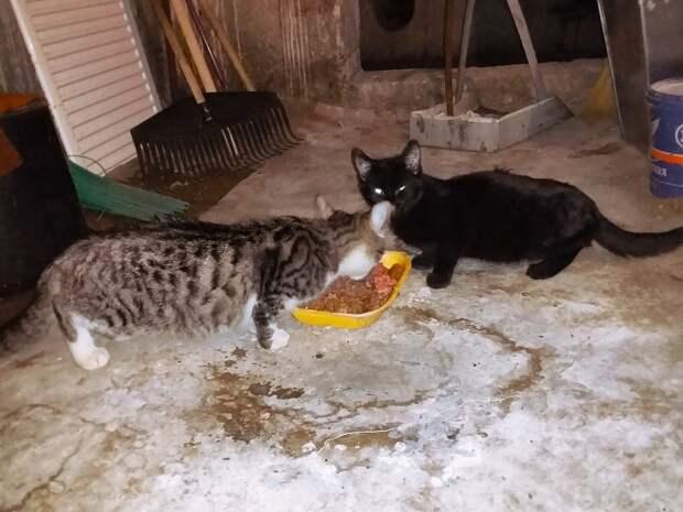 Умоляем, помогите котятам выжить!