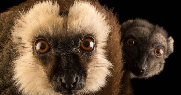 Животные стремительно меняются в ответ на глобальные климатические изменения