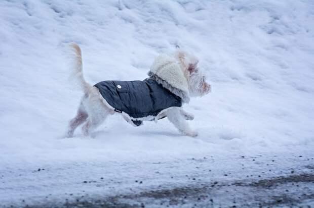 Кинолог рассказала, нужна ли на самом деле собакам зимняя одежда
