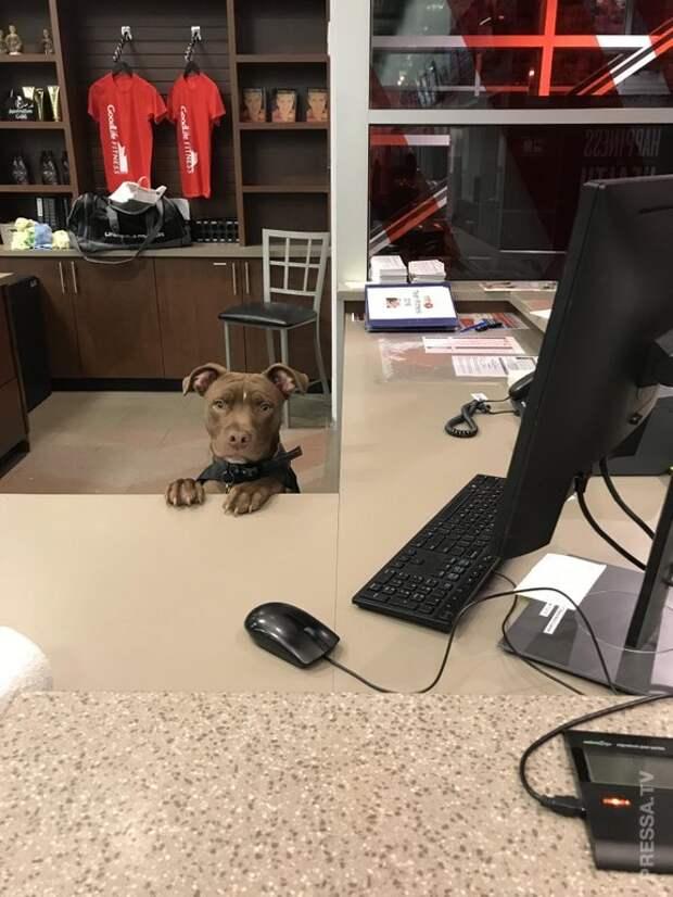 Очаровательные собаки, у которых есть отличная работа