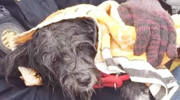 Замерзший пёс пытался убежать от снега: в непогоду он оказался без крыши над головой
