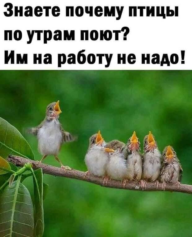 Возможно, это изображение (1 человек и текст «знаете почему птицы по утрам поют? им на работу не надо!»)