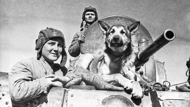 Собаки–герои Великой Отечественной войны