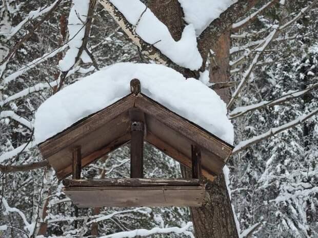 Лучше, чтобы корм был укрыт от дождя и снега