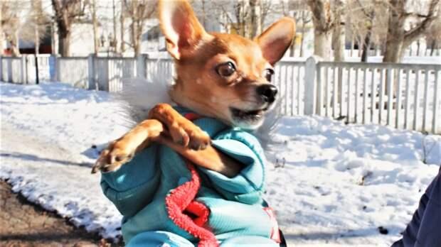 Собаки бывают разные милые и опасные
