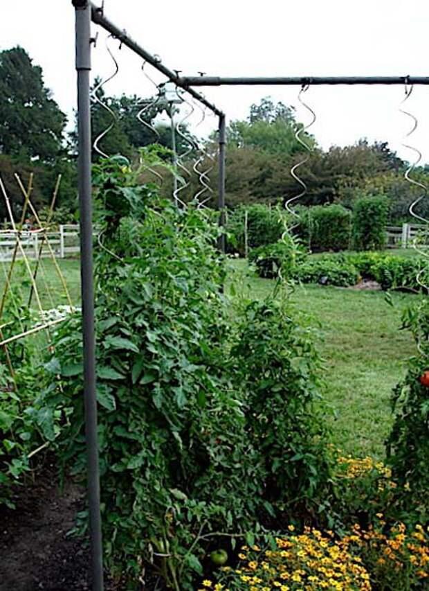 4 самых удобных способа подвязки помидоров
