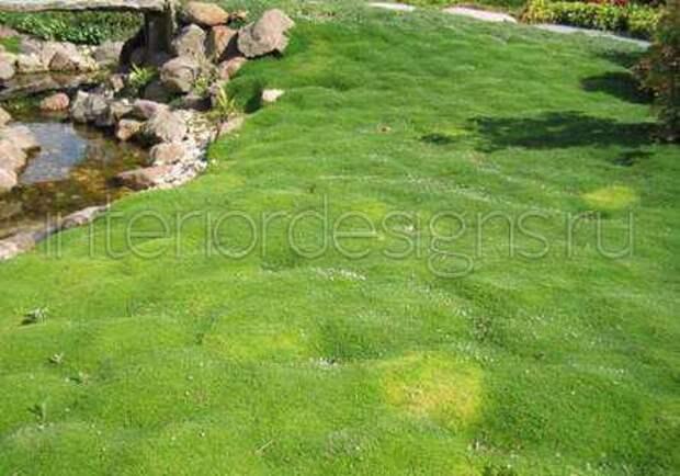 Мох в ландшафтном дизайне: идеи для озеленения садового участка