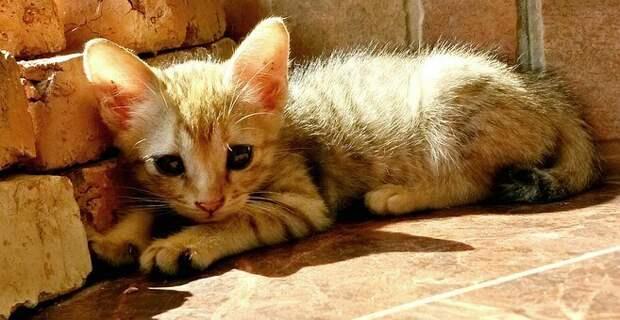 Чужая кошка. В ней бабуля не признала когда-то свою
