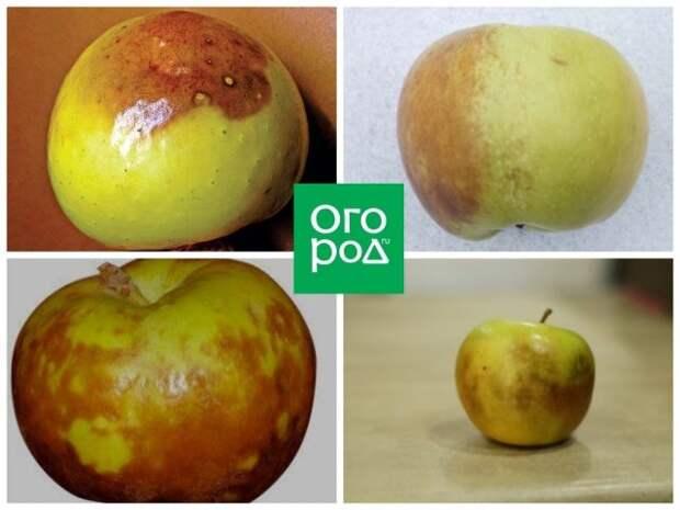 Побурение яблок