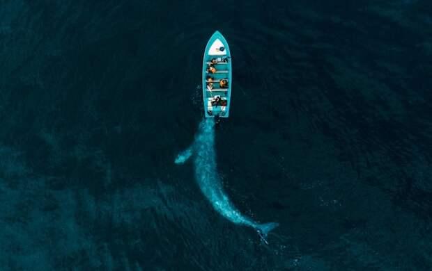 Большое видится нарасстоянии: победители конкурса Drone Photo Awards 2020