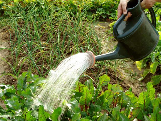 Почему не стоит поливать растения днем