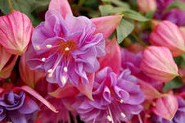 Растения которые не только украсят сад, но и повысят благосостояние