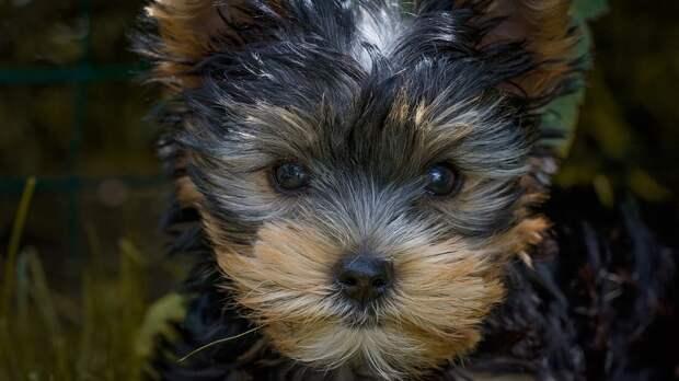 Собака-фантом «похитила» уомички 140 тысяч