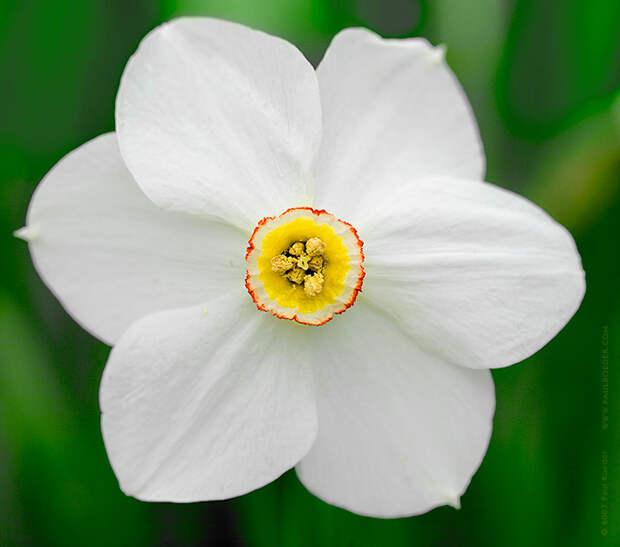 Язык и символика цветов (продолжение)