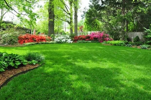 Средство от сорняков на газонеф