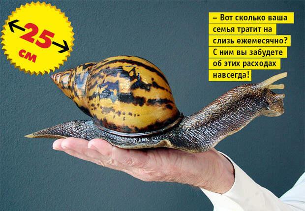 Фото №5 - Кто сказал «Вау!»: шокирующе огромные животные-переростки