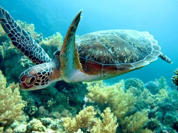 Миграция черепах связана с потеплением океана